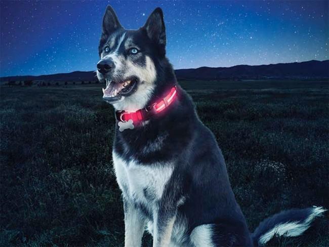 Nite Dawg blinkande hundhalsband