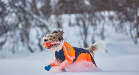 Non-Stop Protector Snow
